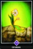výklad karet - osho zen tarot - Odvaha