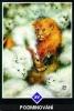výklad karet - osho zen tarot - Podmiňování