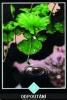 výklad karet - osho zen tarot - Odpoutání